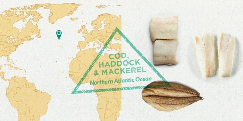 mackerel, cod, haddock