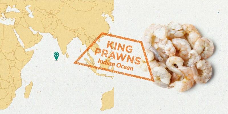 indian king prawns